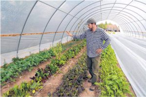 Rick Murphy, owner and manager of Sol Harvest Farm, inspects produce in the 3,000-square-foot hoop house that provides vegetables for Farm & Table.