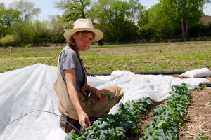 Margery Sweet, field manager at the South Valley Chispas farm, pauses between rows of spigarello.