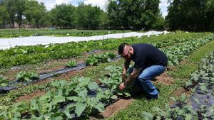Executive chef David Ruiz sources much of the ingredients on the menu at Soul and Vine from five local farms, including Vida Verde Farms, where he is shown here. (Courtesy of Tony Punya)