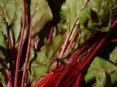 beet-green