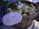 onions-copy-2